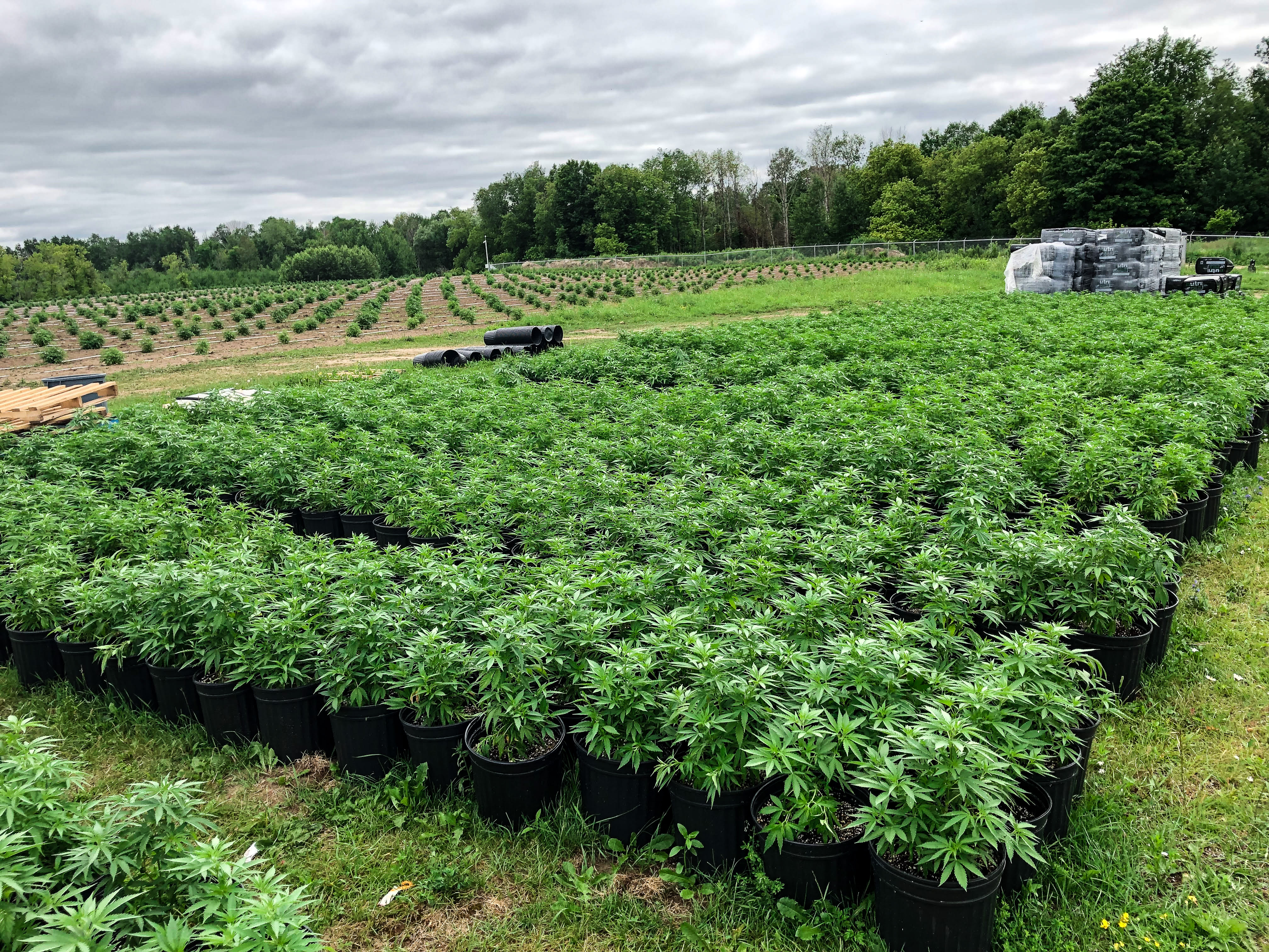 Aleafia Health Secures Health Canada Licence Amendment for Entire 1.1M sq. ft. Port Perry Outdoor Cultivation Facility