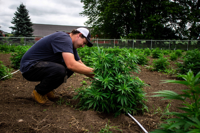 VIDEO: Week 5 of Aleafia Health's 1.1M sq. ft. Outdoor Cannabis Crop